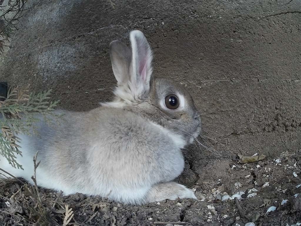 Rabbit sample image taken with SooCoo S60 camera