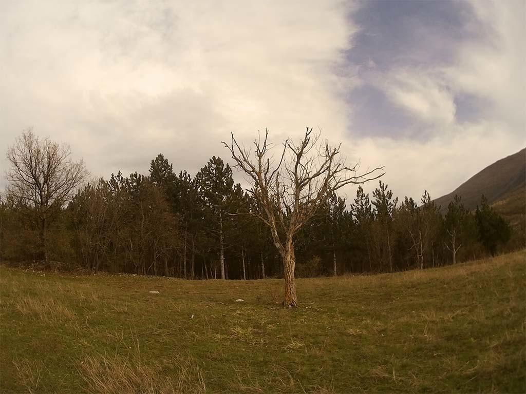 SoocooS60 Sample Photo Nature Tree