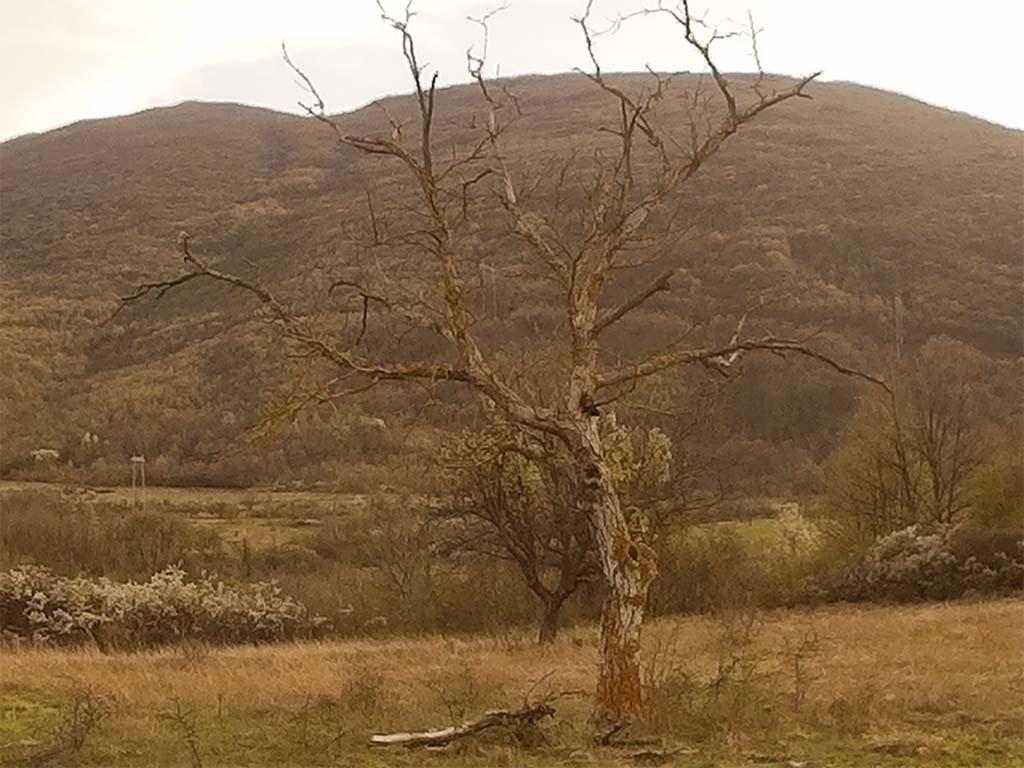 SoocooS60 Sample Photo Nature Tree Digital Zoom X4