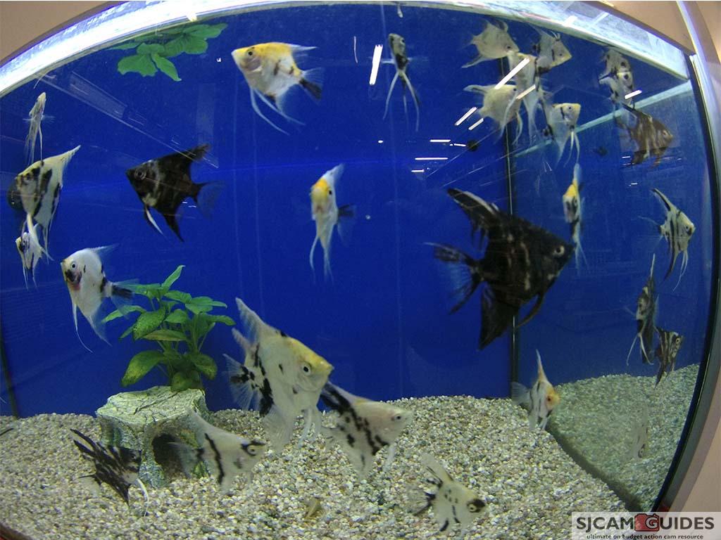Aquarium sample. Not an underwater image.