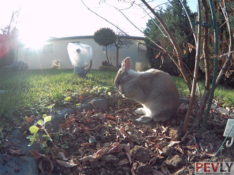 Fifefly 6s Photo Sample Rabbit 1