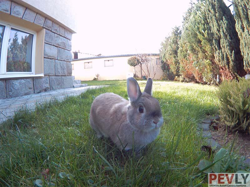 Fifefly 6s Photo Sample Rabbit 2