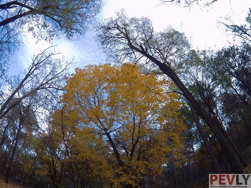 Fifefly 6s Photo Sample Trees Autumn colors yellow