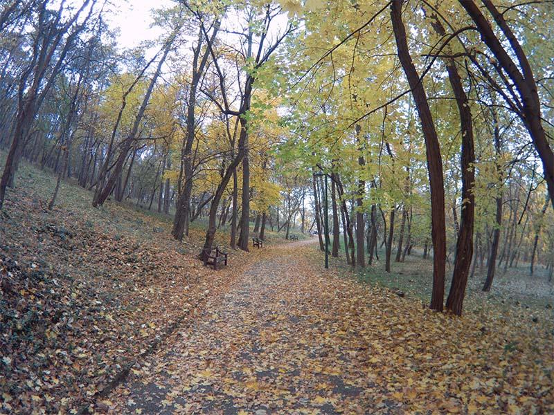 Fifefly 6s Photo Sample autumn colors