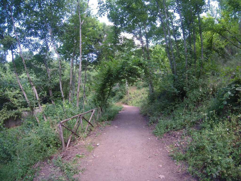 Photo of shady, woodsy path with natural arbor.