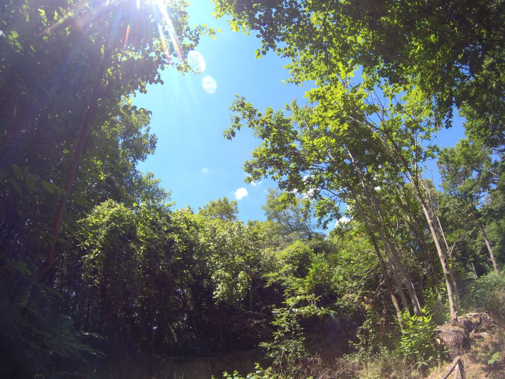 Photo taken of the sky with sunburst through a clearing in the woods.
